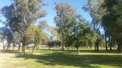 Jellicoe Park Moree