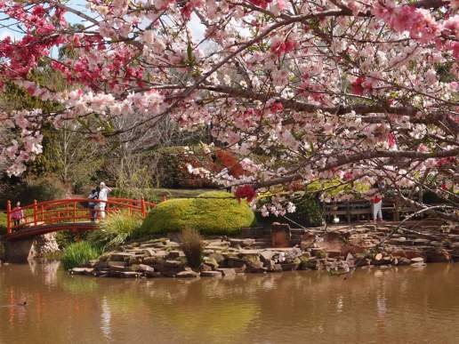 Beauty, Peace and Tranquility of the Japanese Gardens Toowoomba