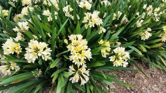 Blooms in Flower