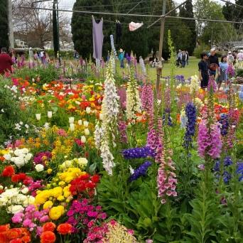 Queens Park Botanical Gardens Display