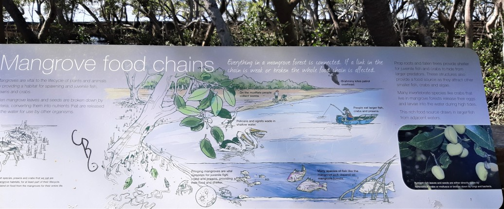 Mangrove Food Chains