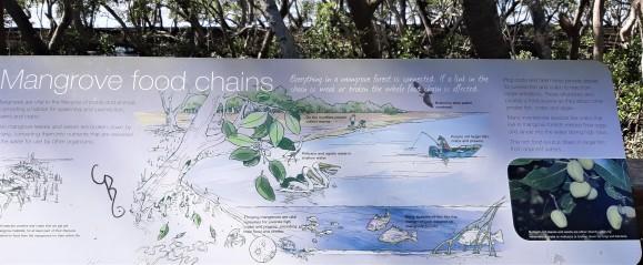 Mangrove Food Chains
