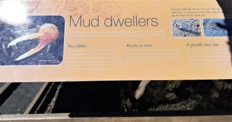 Mud Dwellers