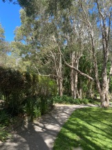 Walk through the Wetlands Forest